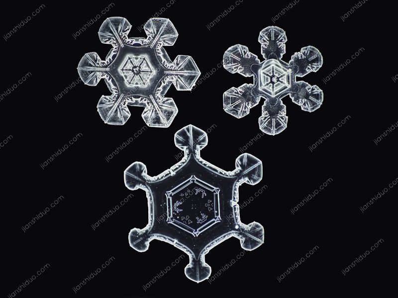 """""""No Two Alike"""" Snowflakes by Nathan Myhrvold"""